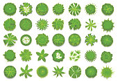 Various green trees, bushes and shrubs, top view for landscape design plan. Set of vector illustrations, isolated on white background.