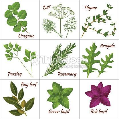 Diff rentes herbes m dicinales ou des herbes aromatiques - Herbes aromatiques cuisine liste ...