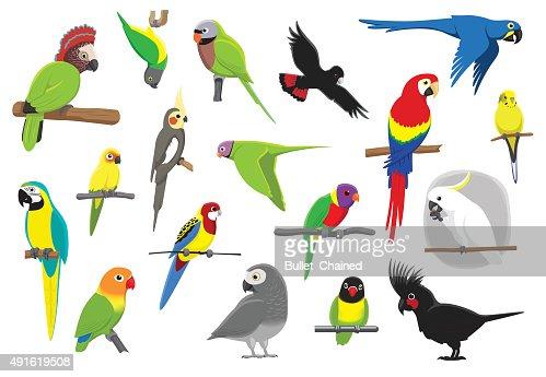 Various Parrots Cartoon Vector Illustration : stock vector