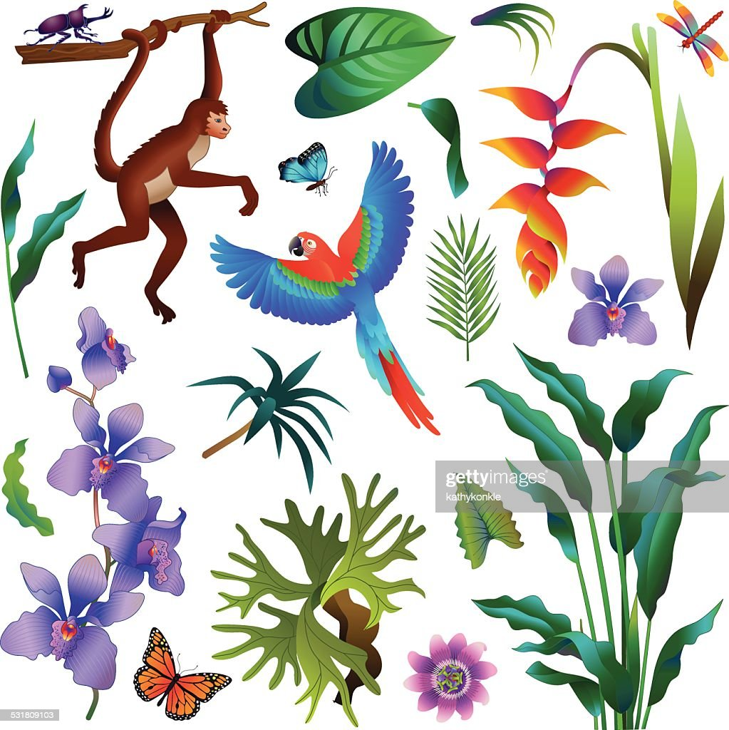 amazon rainforest plants. various tropical amazon rainforest plants and animals vector art z