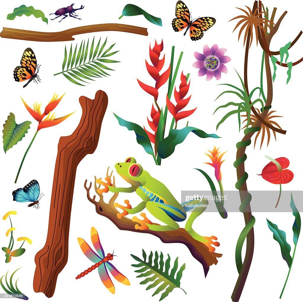 amazon rainforest plants and animals. various tropical amazon rainforest plants and animals vector art