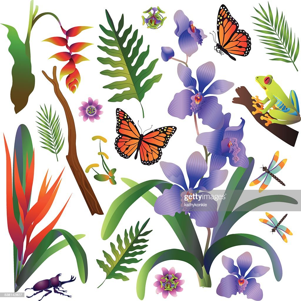 amazon rainforest trees clipart. vector amazon rainforest jungle design elements in color art trees clipart