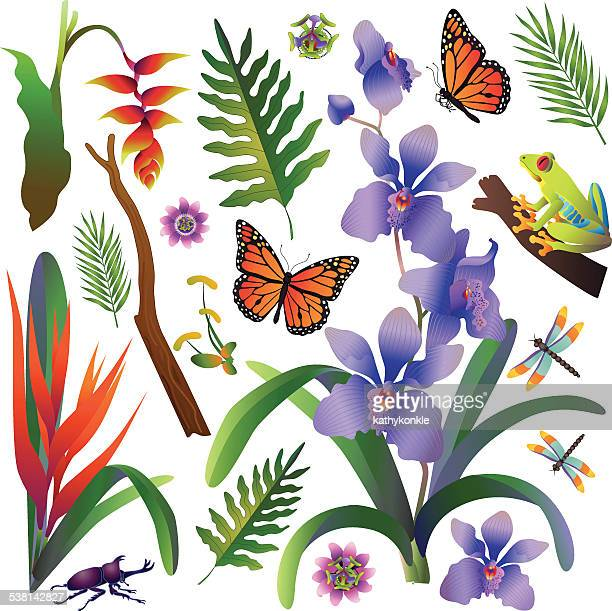 Amazon Rainforest Jungle Plants And Animals In Color Vector Art ...