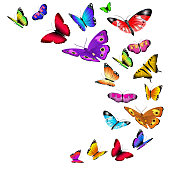 Vector background with flying butterflies. Flow wild butterflies and illustration summer butterfly with color wing