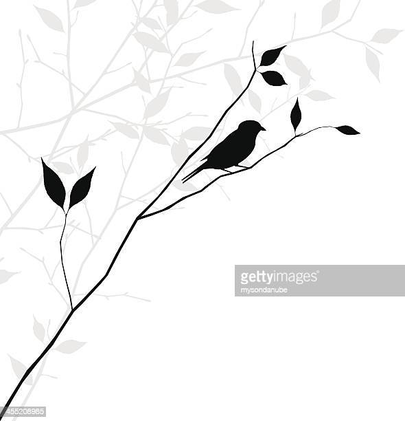 vector bird on branch illustration