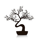 Vector black bonsai tree in a pot. Isolated illustration on white background.