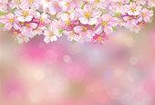 Blossoming pink sakura tree, pink bokeh background.
