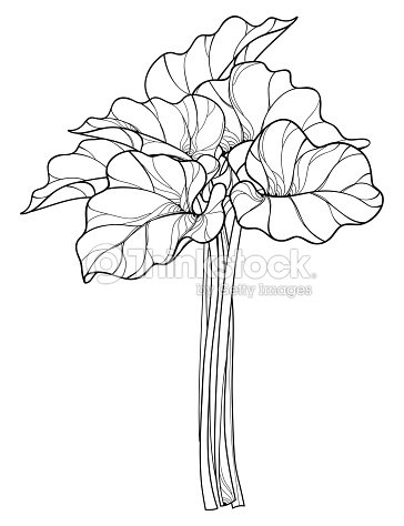 rhubarb coloring pages - photo#18