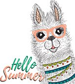 Lama print  isolated. Vector kids print. Wild nature animal. ELement for poster, print, banner or web design.Hello summer