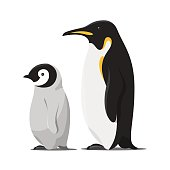 Vector cartoon style illustration of two penguins. Isolated on white background.