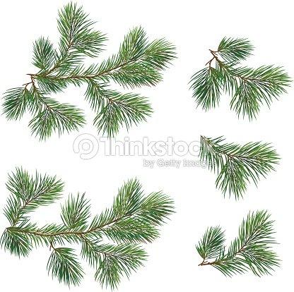 Christmas Branch Vector.Vector Collection Of Christmas Tree Branches Vector Art