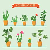 Vector collection of houseplants and flowers in pots on the shelves. Vector flat illustration