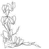 Vector corner bouquet with outline Cyclamen or Alpine violet bunch, bud and leaf in black isolated on white background. Perennial Alpine mountain flower in contour for spring design or coloring page.