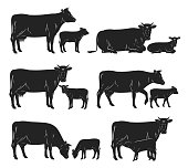 Vector cow and calf silhouettes in different poses isolated on white for farms, groceries, packaging and branding.