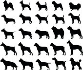 Vector dog breeds silhouettes collection isolated on white. Dog icons collection for cynology, pet clinic and pet shop.