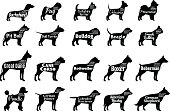 Vector dog breeds silhouettes collection isolated on white. Dog icons collection for cynology, pet clinic and pet shop. Dog breeds names and personality description