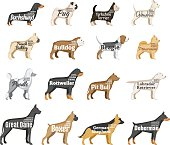 Vector dog breeds illustration with names and personality description isolated on white for dog club, pet clinic and shop.