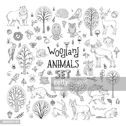 Vector doodles woodland animals set. : Vector Art