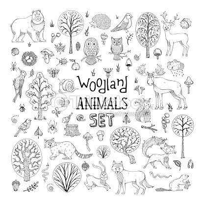 Vector doodles woodland animals set. : stock vector