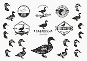 Set of duck labels. Butchery labels with sample text. Duck design elements, icons and silhouettes for groceries, meat stores, packaging and advertising. Duck cuts diagram