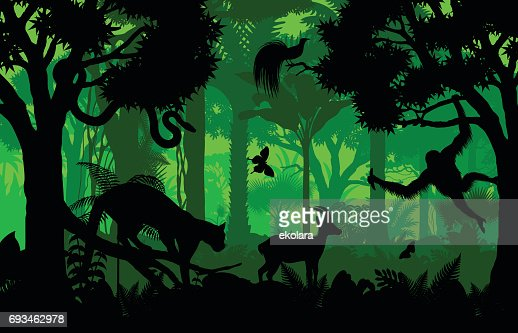 Vector evening indonesian tropical rainforest Jungle background with clouded leopard, gazelle, python, paradise bird and orangutan : Vector Art