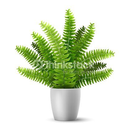 vector fern in a pot : stock vector