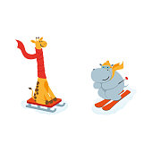 vector flat cartoon funny hippo character having fun mountain skiing, giraffe sledding smiling wearing cap scarf. Winter animal outdoor activities concept. Isolated illustrationo on a white background