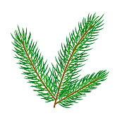 vector flat cartoon style spruce, pine fir tree leaves - needles on branch set. Isolated illustration on a white background. Christmas cards, banners of presentation decoration design symbol