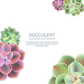 Vector frame with realistic of pink purple and green succulent echeveria. Cactus flowers top view on white background. Floral home garden illustration.