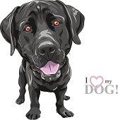 portrait of a close-up of smiling black dog breed Labrador Retriever