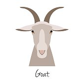 Vector flat cartoon horned goat head,farm animal. , goat muzzle isolated. Flat style, cartoon object. poster banner print advertising, design element.