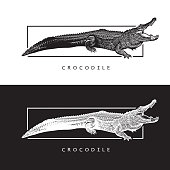 Black and white illustration of crocodilian reptile, logotype, clipart in engraving style, design element for logo or template.