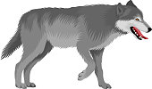 vector gray wolf