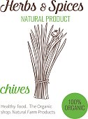 Vector hand drawn chives. Sketch illustration. Herbs and spices banner.