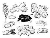 Vector hand drawn Ginger set. Root, ginger pieces and flower. Engraved style illustration. Herbal spice. Detox food ingredient.