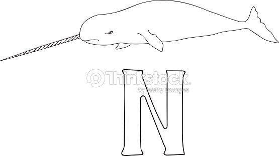 Vector Hand Drawn Illustration Capital Letter N On Alphabet Card Black And White Realistic Narwhal Isolated Kids ABC School Education Coloring Page