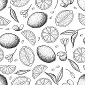 Vector hand drawn lime and lemon seamless pattern. Tropical summer citrus fruit engraved style background. Detailed food drawing. Great for summer decor or detox program