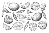 Vector hand drawn lemon set. Whole lemon, sliced pieces, half, leafe and seed sketch. Tropical summer fruit engraved style illustration. Detailed citrus drawing. Great for tea, juice, lemon water