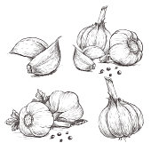 Vector hand drawn set of garlic. Herbs and spices sketch illustration