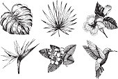Vector hand drawn tropical plant icons. Exotic engraved leaves and flowers. Monstera, livistona palm leaves, bird of paradise, plumeria, hibiscus, hummingbird. Use for exotic beach, wedding, partty