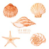 Hand paint starfish, scallop, shell, conch, mollusk. Summer holidays design elements.