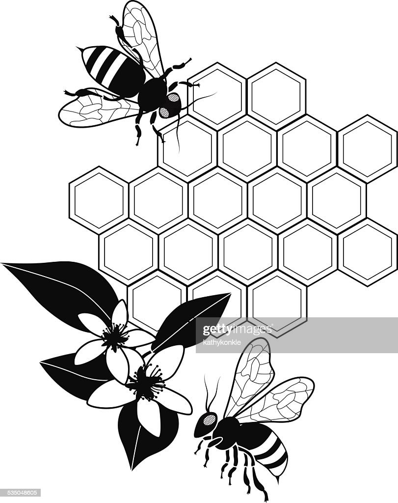 Line Drawing Bee : Vector honey bees with honeycomb and orange blossoms