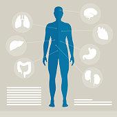 Vector Illustration of Human Organs