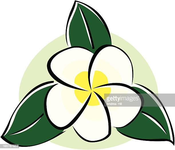 Vektor-Symbol des Plumeria Blüte isoliert auf weißem Hintergrund.