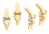 Human joints vector icons for orthopedics and surgery medical design. Vector isolated icons of leg knee or arm and hand joints with cartilage synovial fluid for orthopedics treatment medicine pills