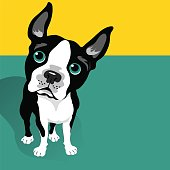 Illustration of a cute Boston Terrier Dog with space for text. For posters, cards, banners.