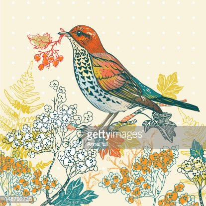 vector illustration of a forest bird : Vector Art