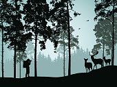 Vector illustration of coniferous forest with deer doe with a fawn and a tourist standing with camera