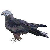 Vector illustration of eagle. EPS 10