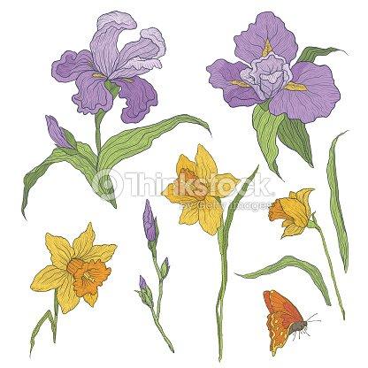 Ilustracion Vectorial De Flores Dibujadas A Mano Graficamente